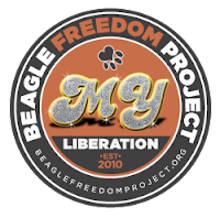 Beagle Freedom Project!
