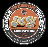 Beagle Freedom Project!