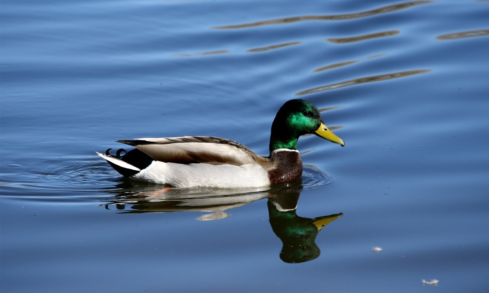wild duck View all our holiday lodges in norfolk lodges are available for weekly hire, as well as for short breaks and longer periods book today.