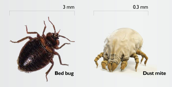 Dust Mites Bed Bugs Bed Bugs New York City