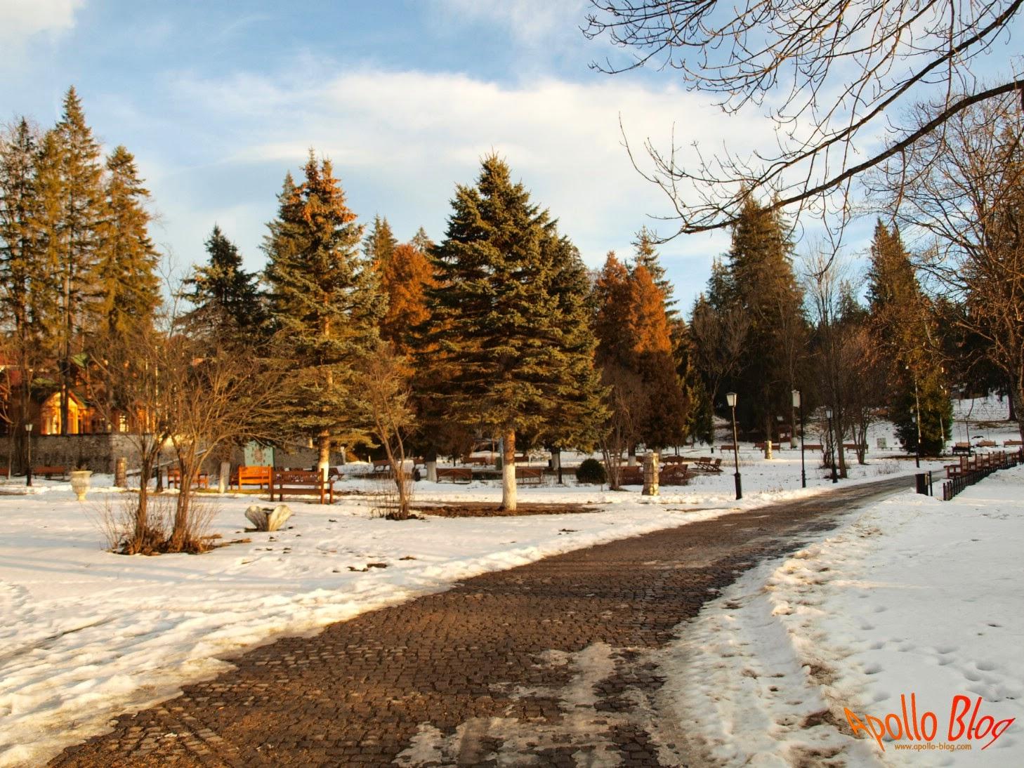 Copaci frumosi, iarna