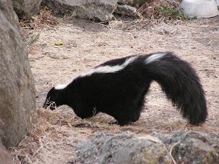 ملف كامل عن اجمل واروع الصور للحيوانات  المفترسة   حيوانات الغابة  222579708_a74ac31d41