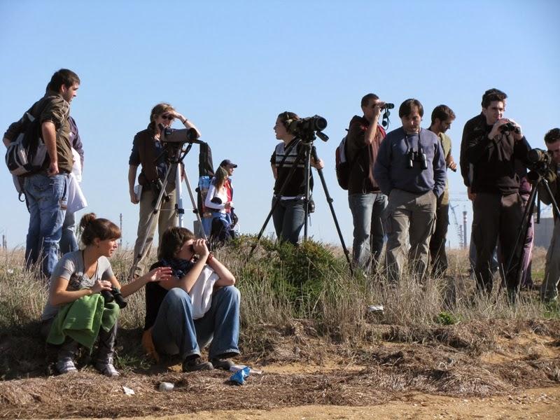 Curso de Iniciación a la Ornitología 2008. Organiza SEO-Sevilla. Excursión a Marismas del Odiel.