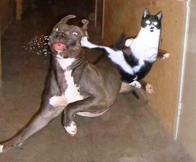 Gato Karateka.