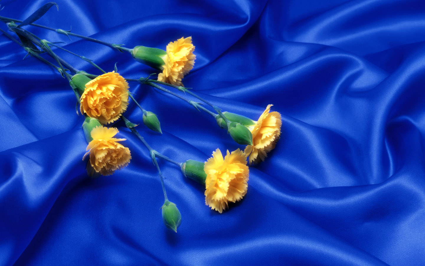 Wnp Wallpapers Pictures Blue With Yellow Flower Wallpaper