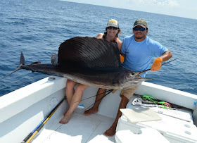 Lindsay's Pacific Sailfish