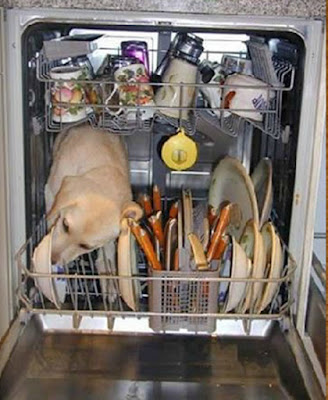 dog not waste food in dishwasher