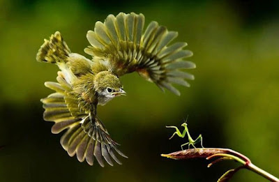 A Bird and a Grasshopper