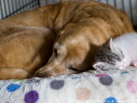 犬と猫のお昼寝