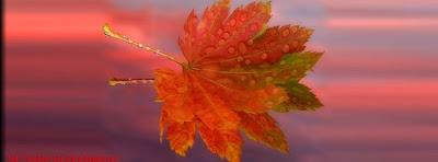 Couverture facebook feuilles d'automne 4
