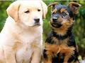 Jogos de cachorros
