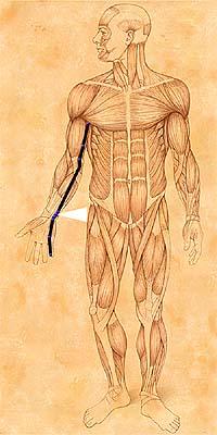 jian shu syracuse acupuncture benefits - photo#13