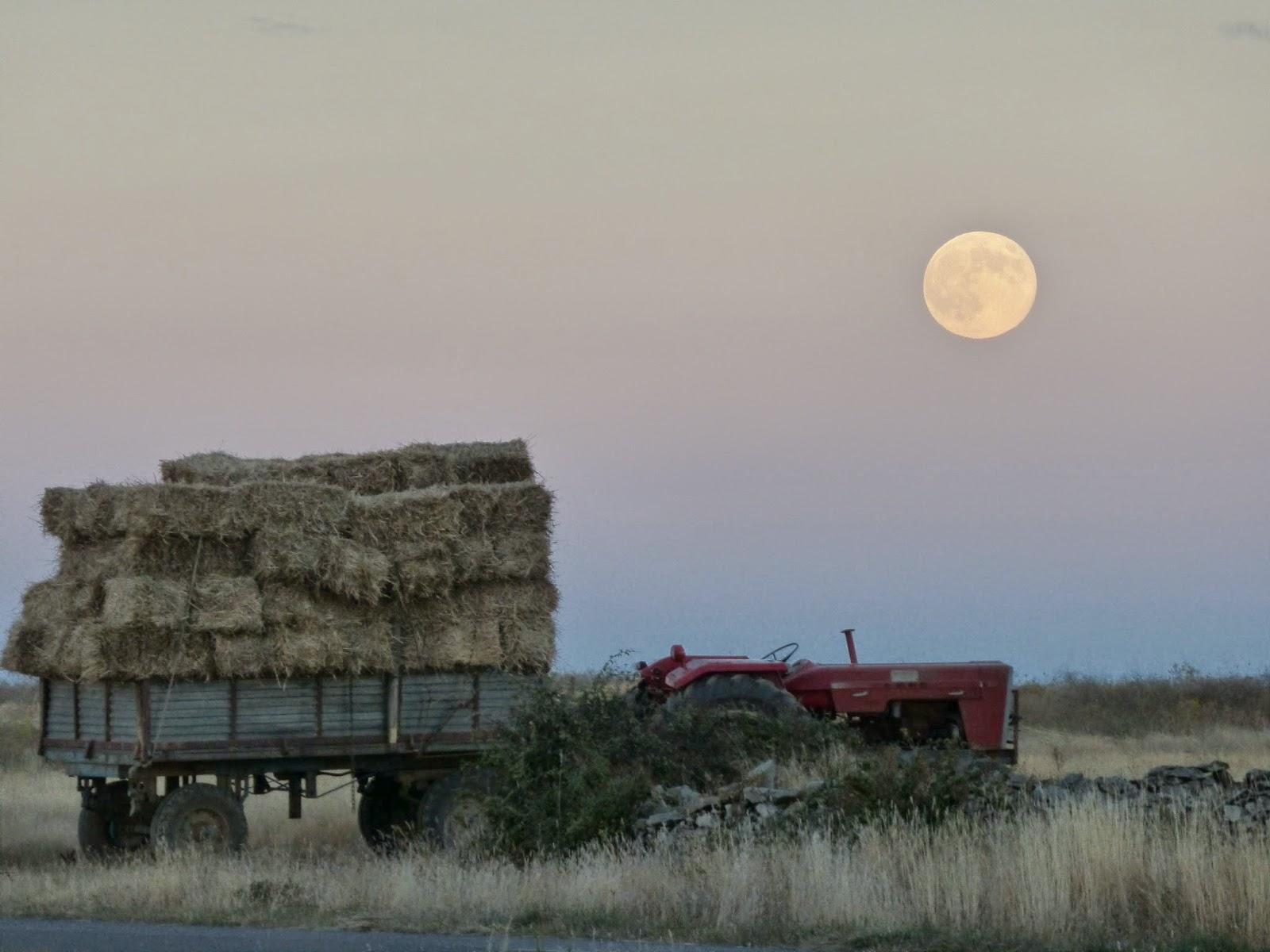 ¿Y en el campo, como inluye la luna llena?