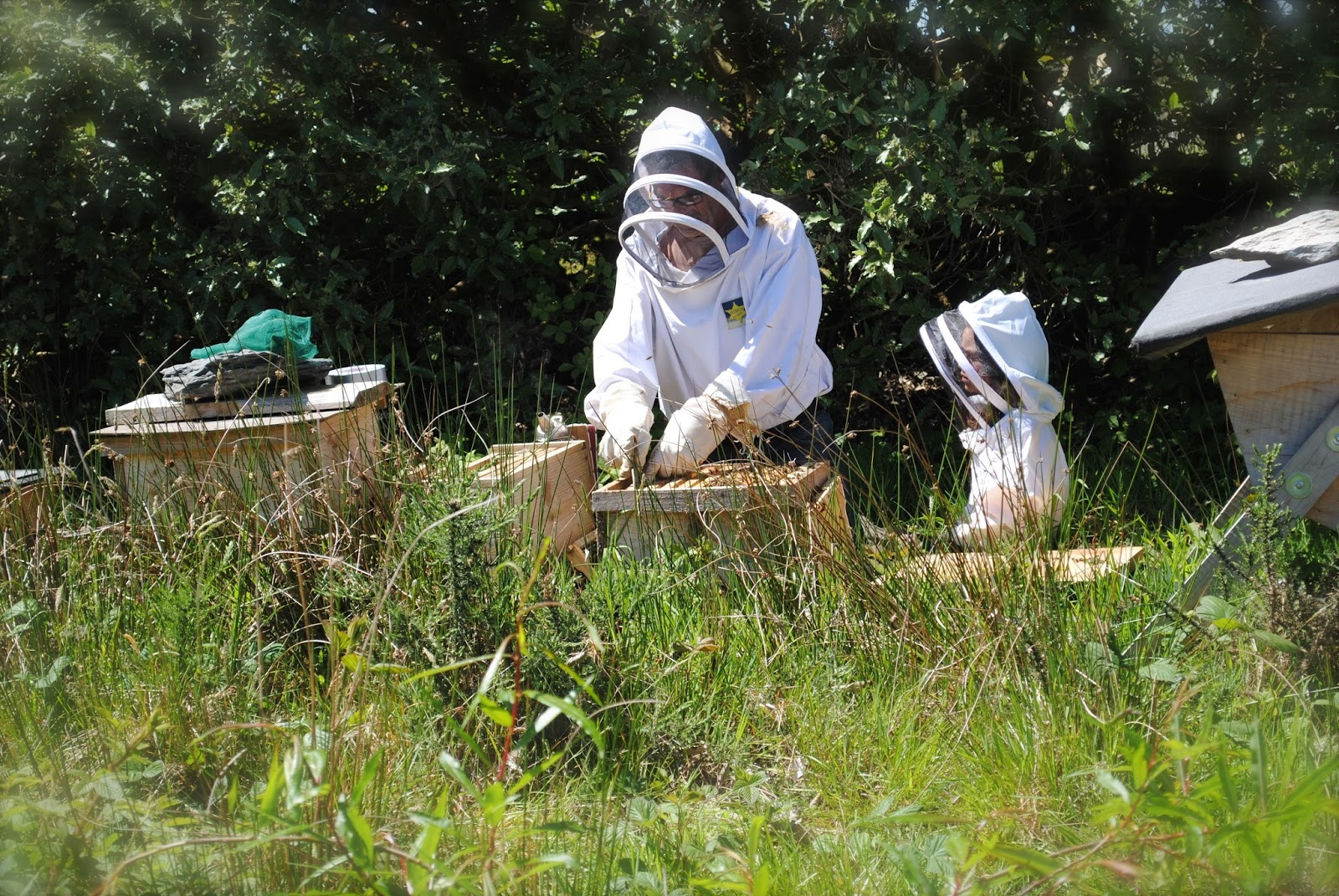 april danann saving the bees one backyard hive at a time bee