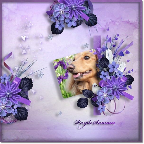 DSB  Purple Summer