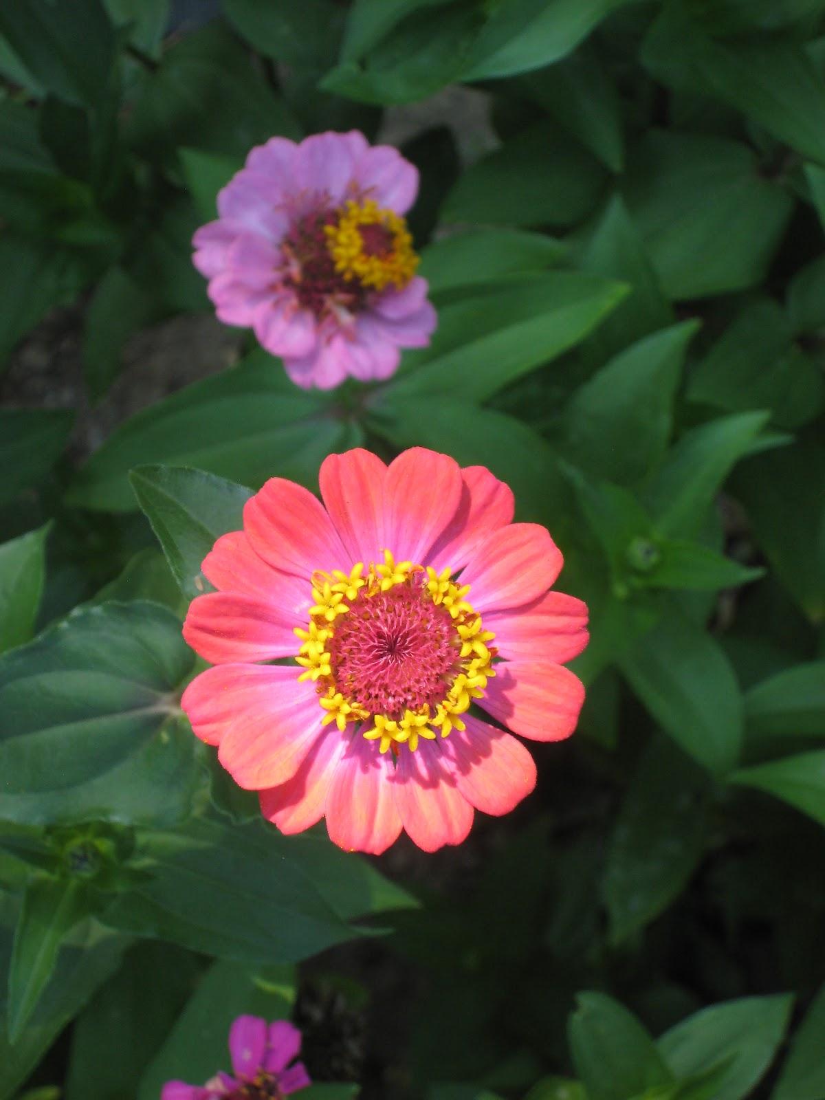 Classic elite yarns jones farm and greenhouse hot house summer jones farm and greenhouse hot house summer flowers perennials mightylinksfo