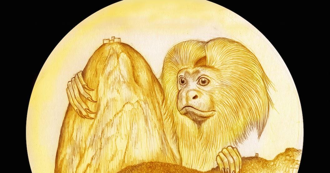 mico leão dourado pode estampar medalha de ouro na olimpíada do rio