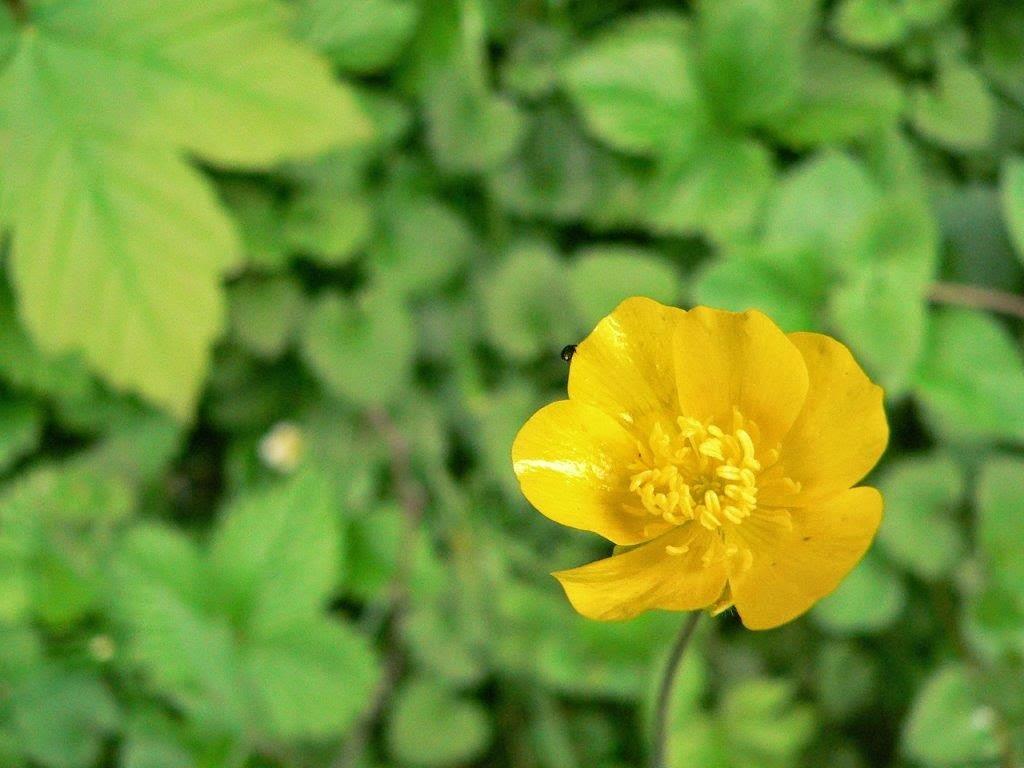 Blume Frühling gelb glücklich Alltag