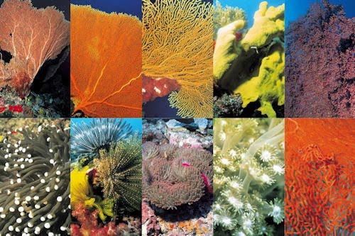 Fotografías de corales en el fondo marino I