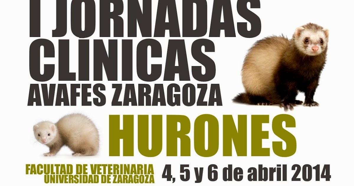 I Jornadas Clínicas AVAFES Zaragoza - HURONES | AVAFES-Zaragoza
