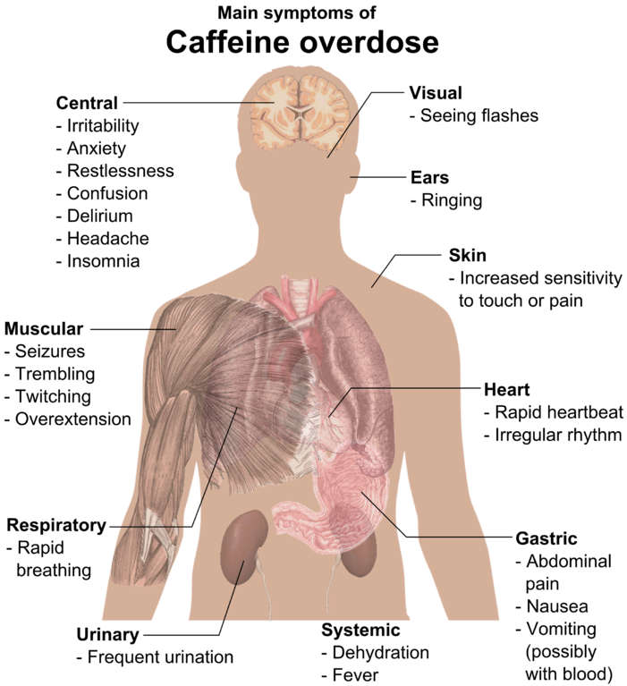 effects of caffeine on the human boby Tea (which contains caffeine) has no impact on gout incidence, thus other chemical than caffeine induces this effect the main suspected being the phenol chlorogenic acid, a powerful antioxidant 10.