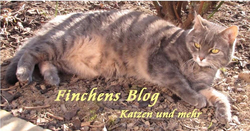 Finchen Seidenfells Blog