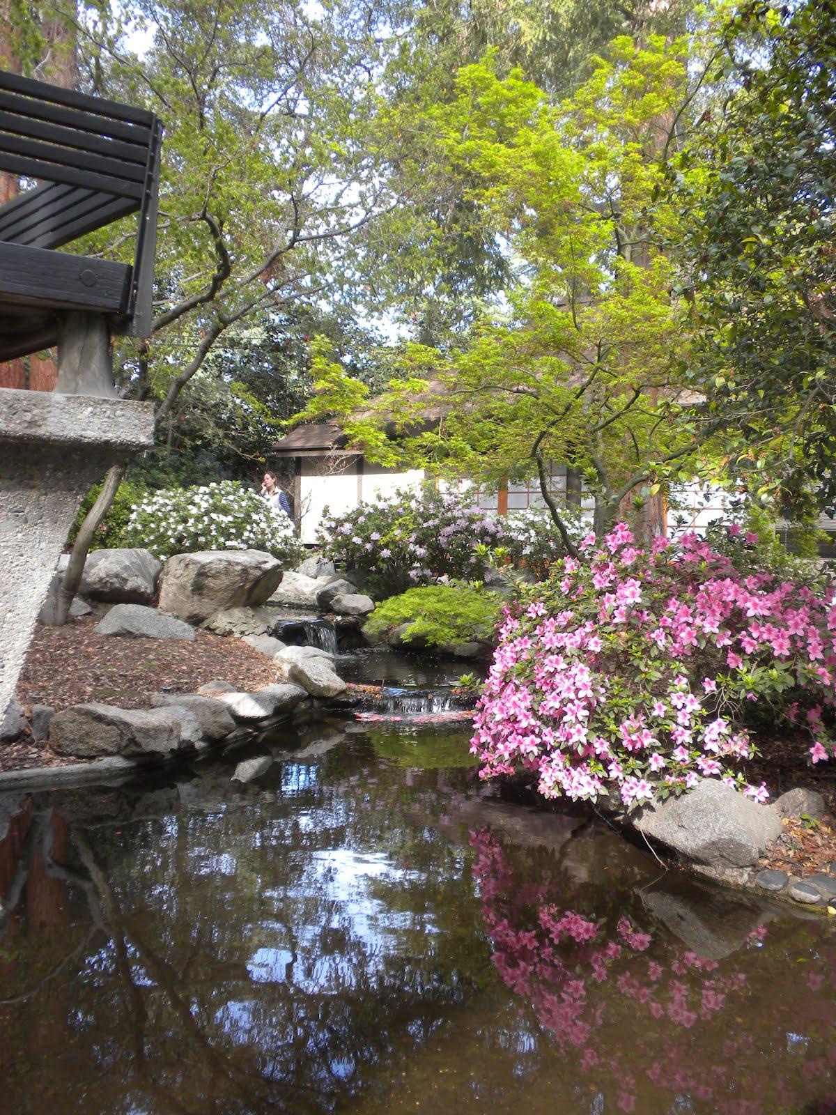 Blog rachel fujii illustration descanso gardens visit - Descanso gardens cherry blossom festival ...