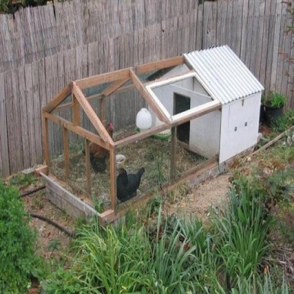 Como inciar uma cria o de galinha caipira franguinho for Como criar caracoles de jardin