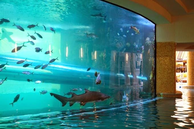 أجمل حمامات السباحة أو المسابح