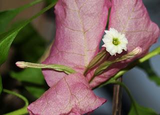 blomst fire blader