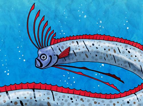 oarfish | [組圖+影片] 的最新詳盡資料** (必看!!) - www ... Oarfish Skeleton