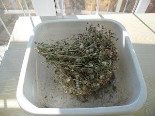 20 ноября, обработка семян салата