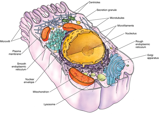 an analysis of every cell surrounded by a plasma membrane All cells, whether bacterial or from higher organisms are surrounded by a  membrane the membrane is what separates the cell from its external.