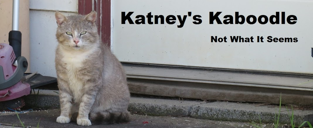 Katney's Kaboodle