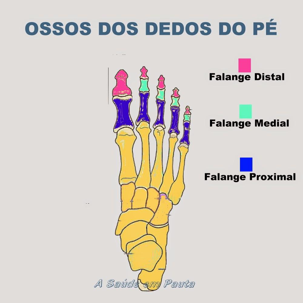 Nomes e localização dos ossos dos dedos dos pés