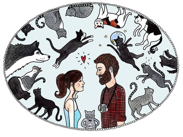 Koty. Wszędzie koty.