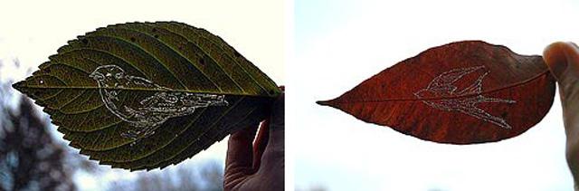 Pierced+leaves.jpg