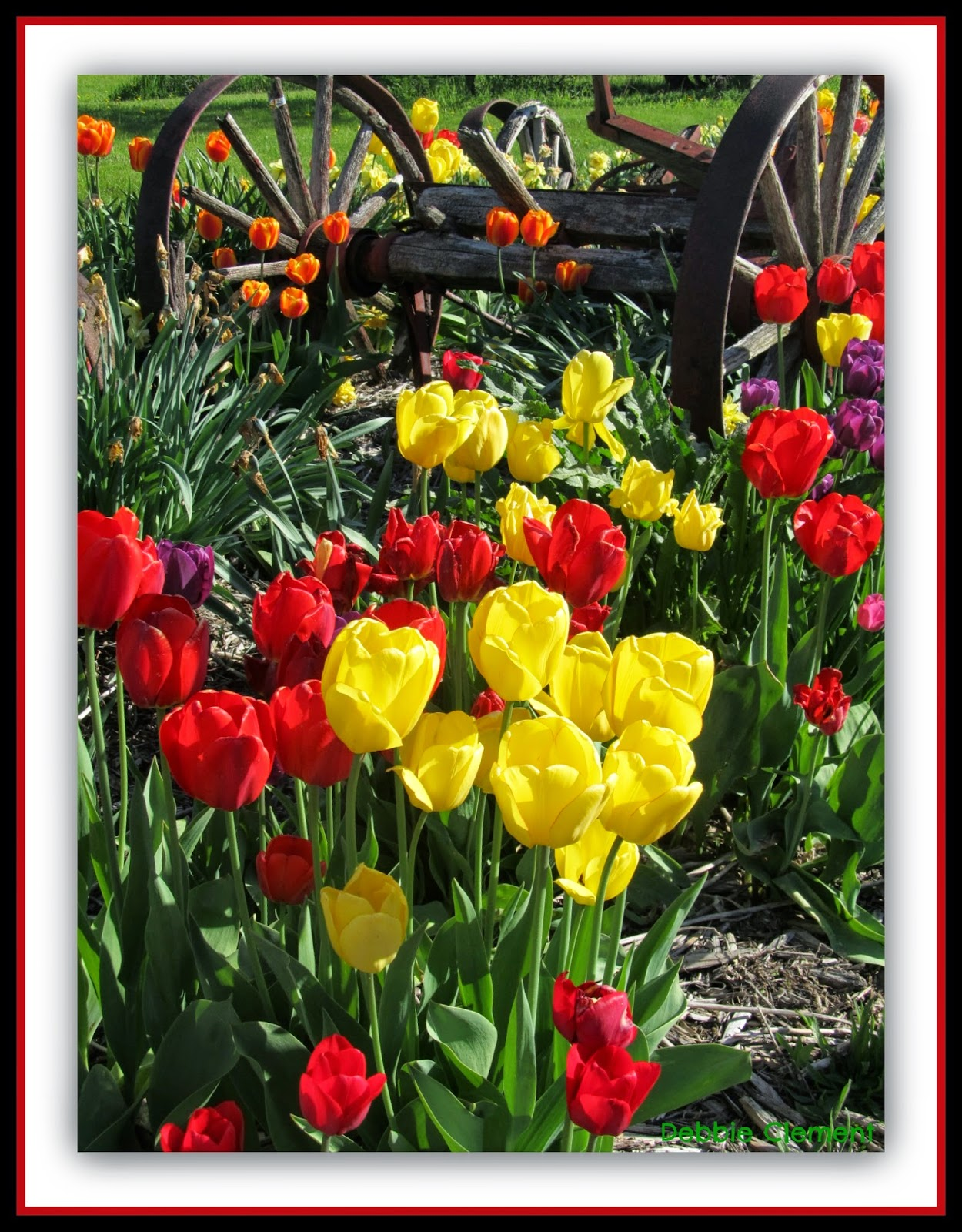 Tulips, Time and Legacy: Thank you Maya Angelou by Debbie Clement