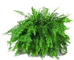 tanaman antipolusi