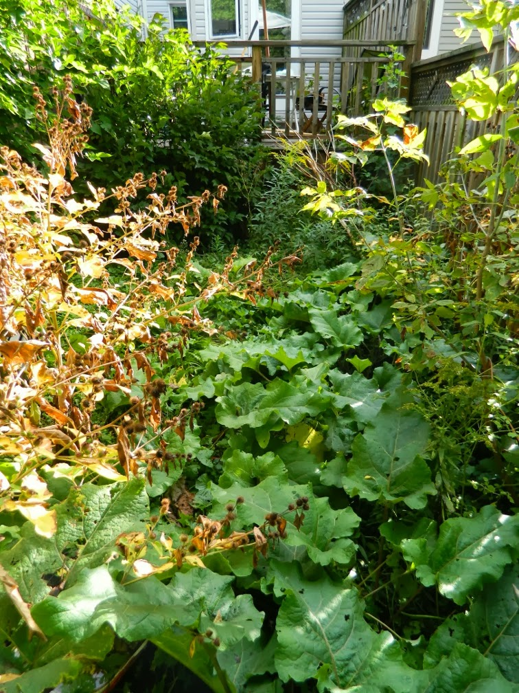 Toronto backyard garden cleanup Woodfield Rd. before Paul Jung Gardening Services