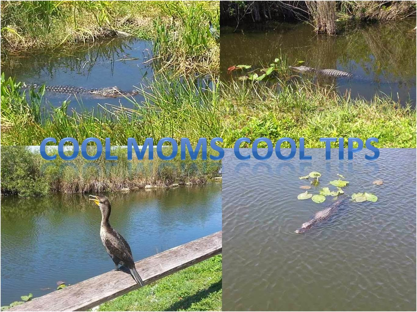 Cool Moms Cool Tips Miami Is Part Of My Passiongenome