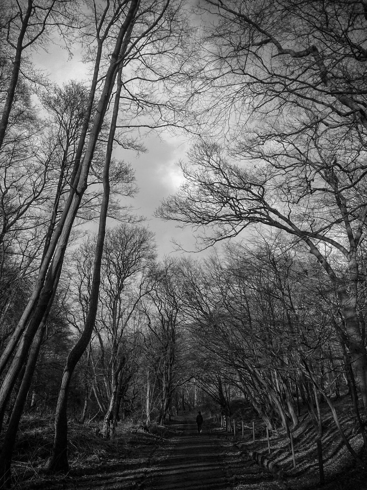 Eerie black and white woodland - photograph by A Handmade Cottage