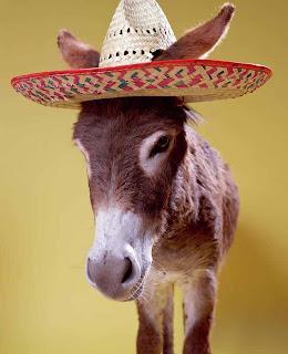 الظلم لا يحتاج الى مبررات donkey-equus-hemoniu