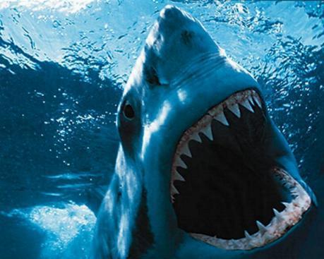Megalodon Shark Teeth