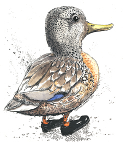 ammon perry illustartion pen ink duck fowl drawing gift harrisburg pa