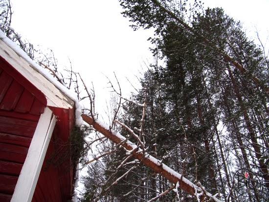 timmerhuset med träd stormfällda över taket