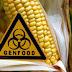 La Unión Europea autorizaría cultivo de maíz transgénico TC1507