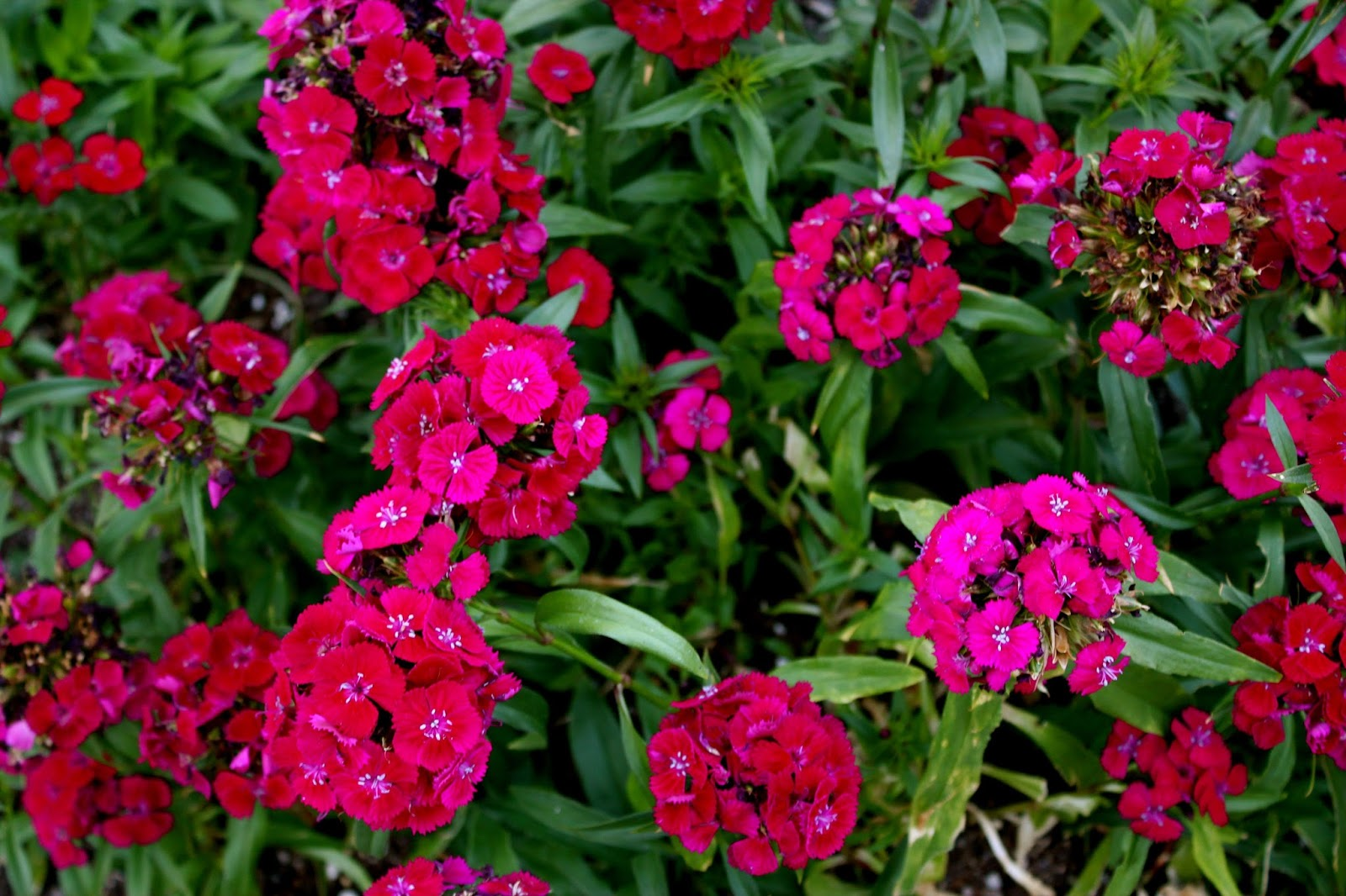 bossy betty monday morning flowers