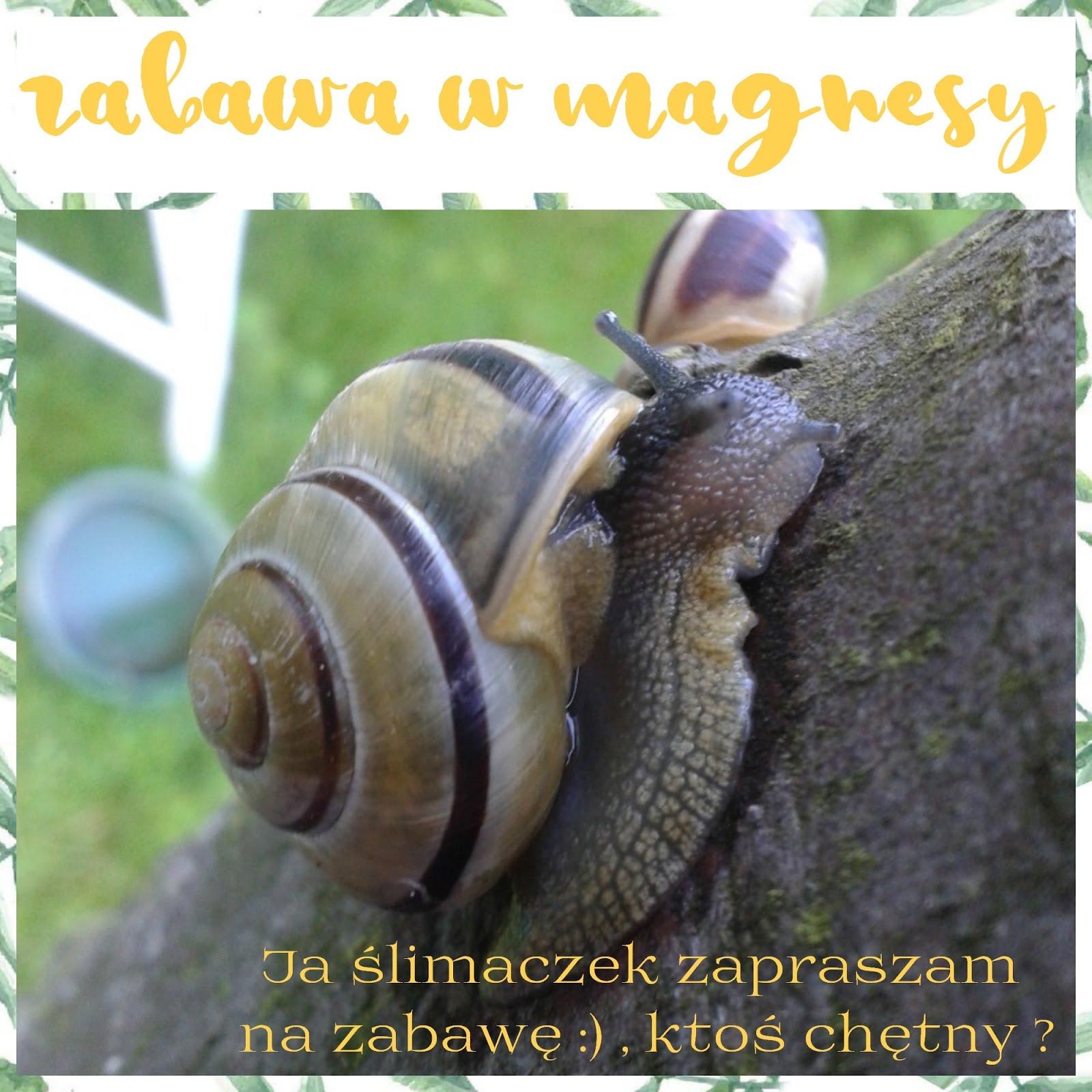 Ślimaczek zaprasza:)