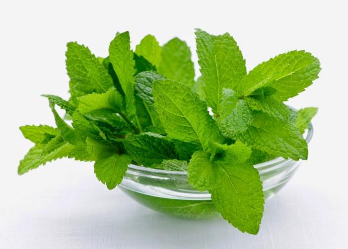 نتيجة بحث الصور عن mint for skin